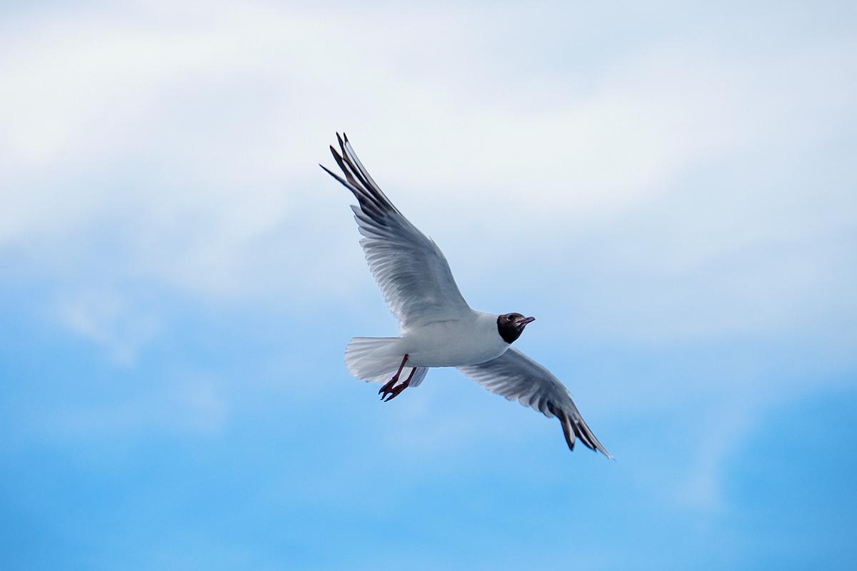 "6.- Fauna o flora Jul-15 ""Al vuelo"""